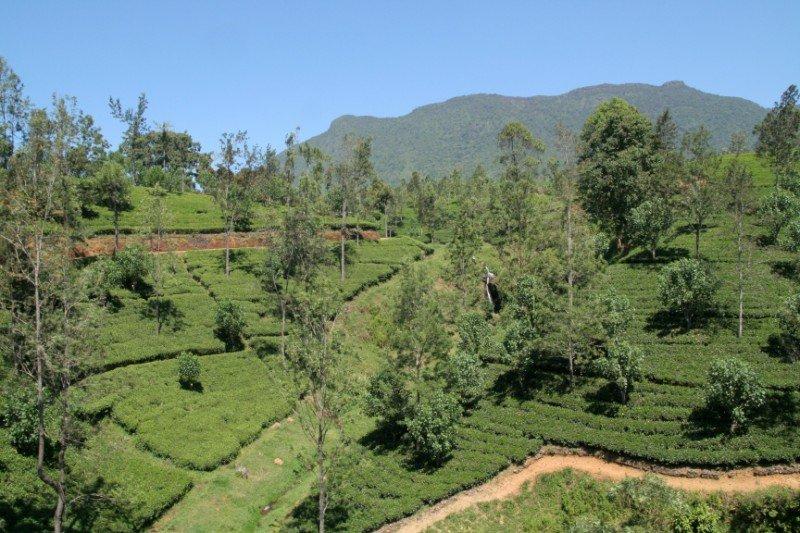 srilanka296800x600.jpg