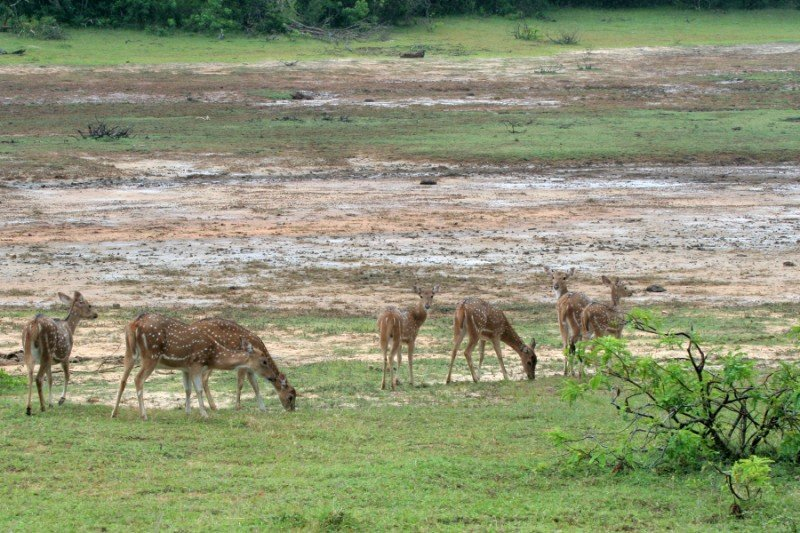 srilanka299800x6001.jpg