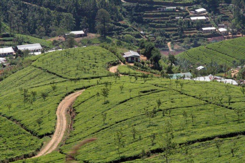 srilanka315800x600.jpg