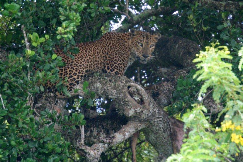 srilanka316800x600.jpg